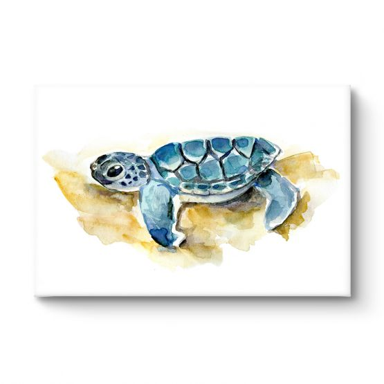 Baby Sea Turtle - Canvas