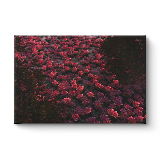 Waterlilies and Cherry Trees - Canvas