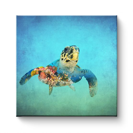 Turtle - Canvas